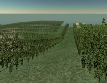 The vineyards at Capozzi Island