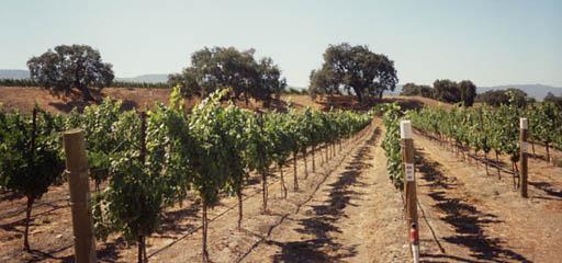Westerly Vineyard Roussanne