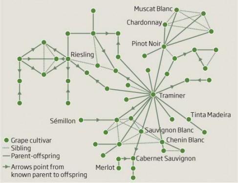 Wine Family Tree