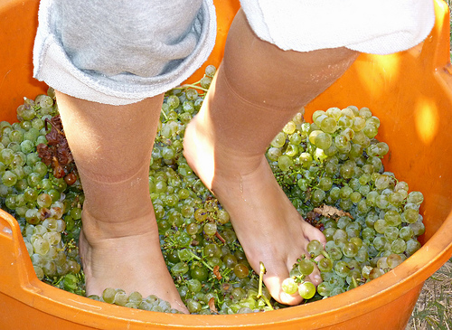 Feet crushing grapes